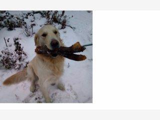 Дать объявление о пропаже находке собаки подать объявление сдать квартиру братск
